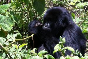 Uganda-Ruanda-Kenya 2013