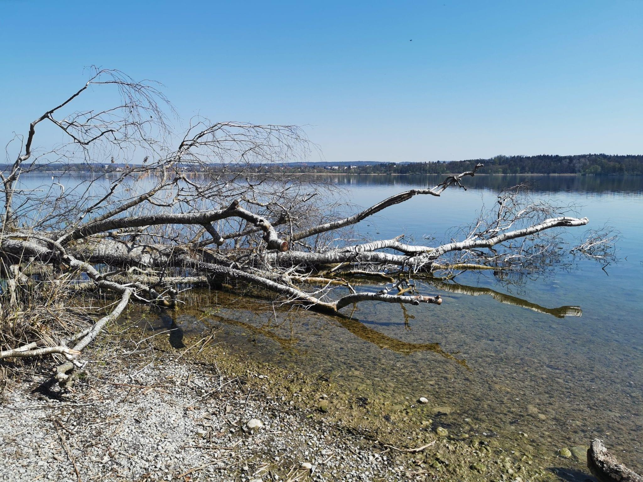 Erste Fischversuche am Greifensee