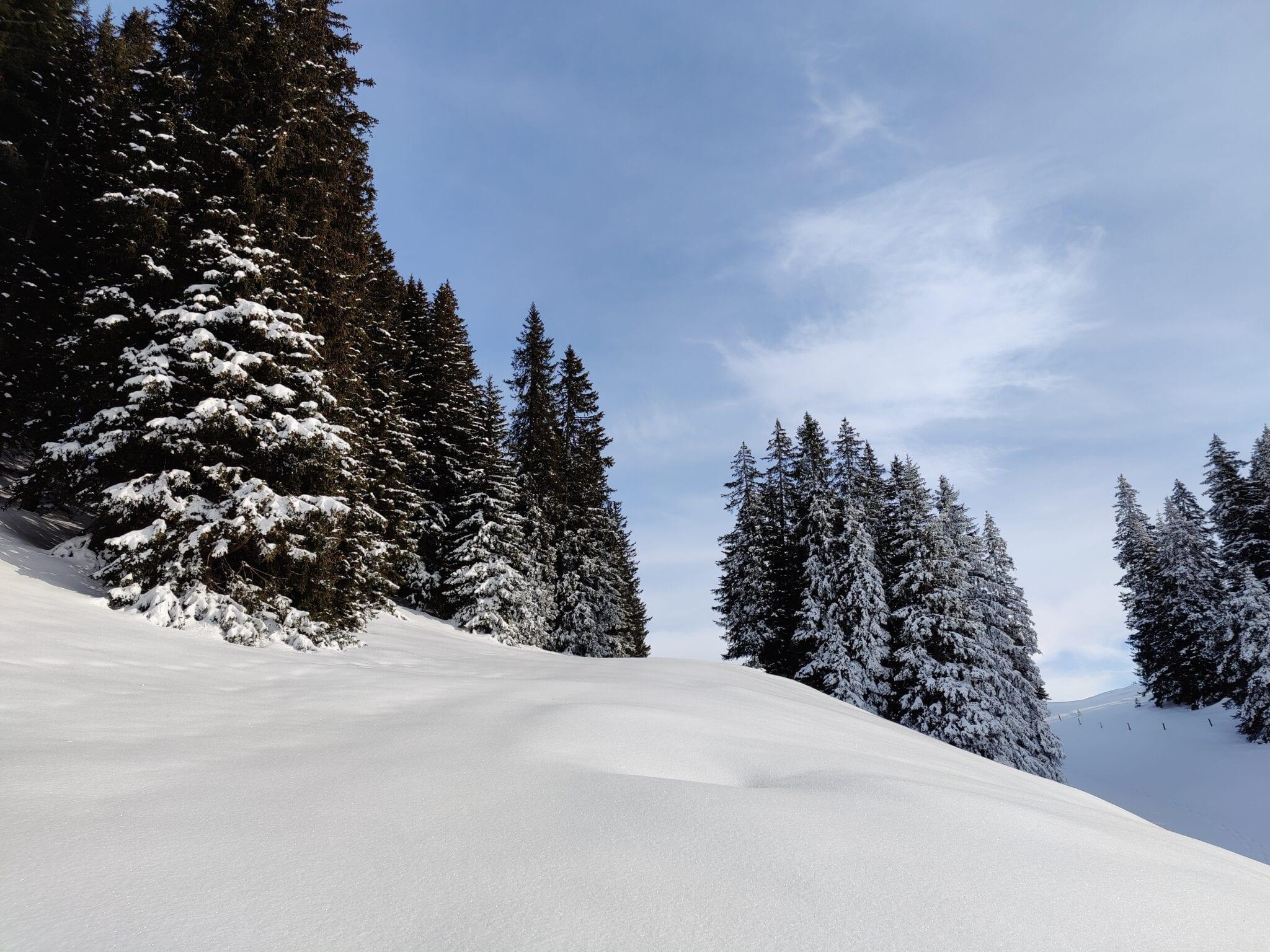 Schneeschuh Rundwanderung Grüsch
