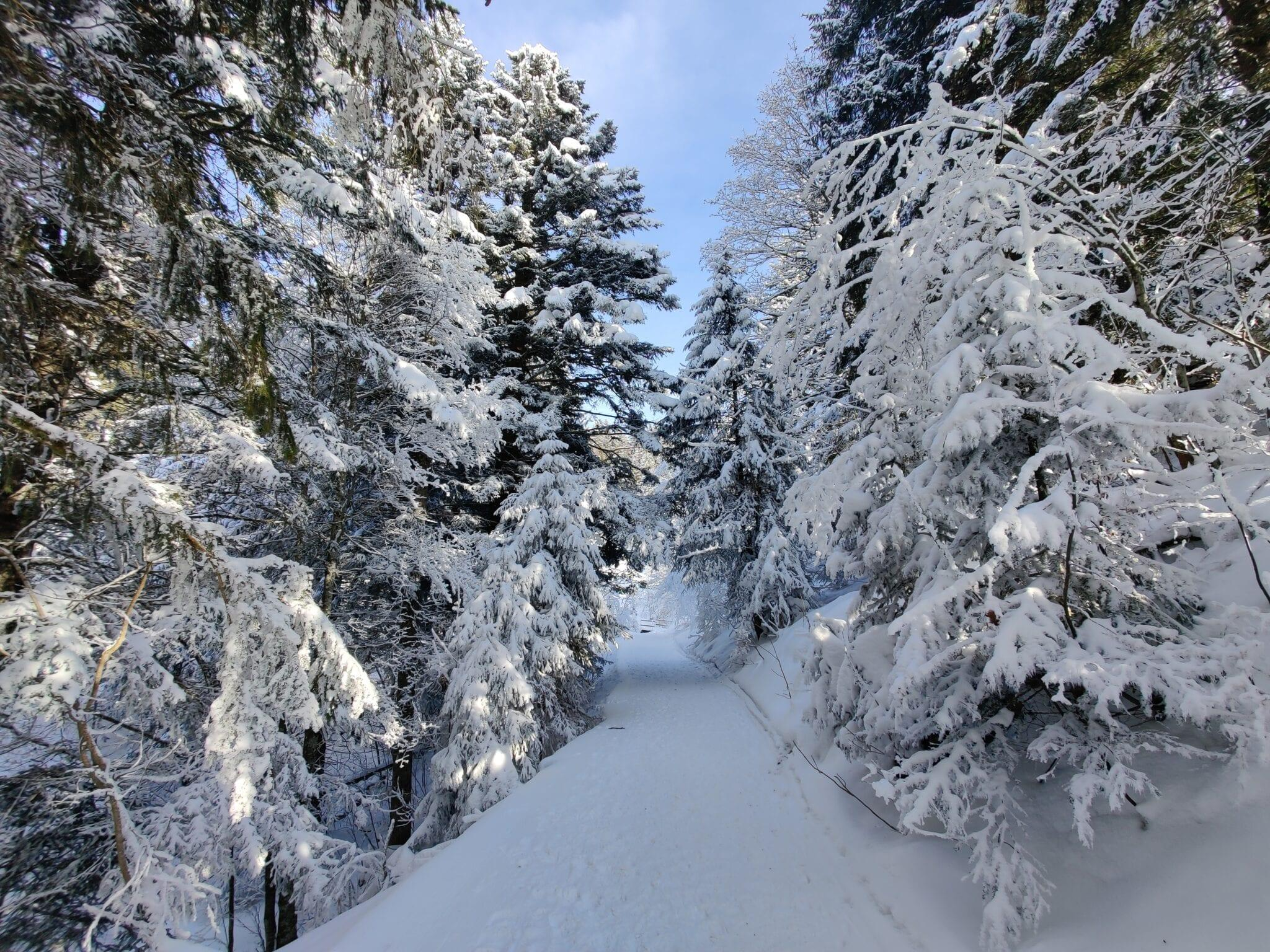 Schneeschuhrundwanderung Illgau – Ibergeregg