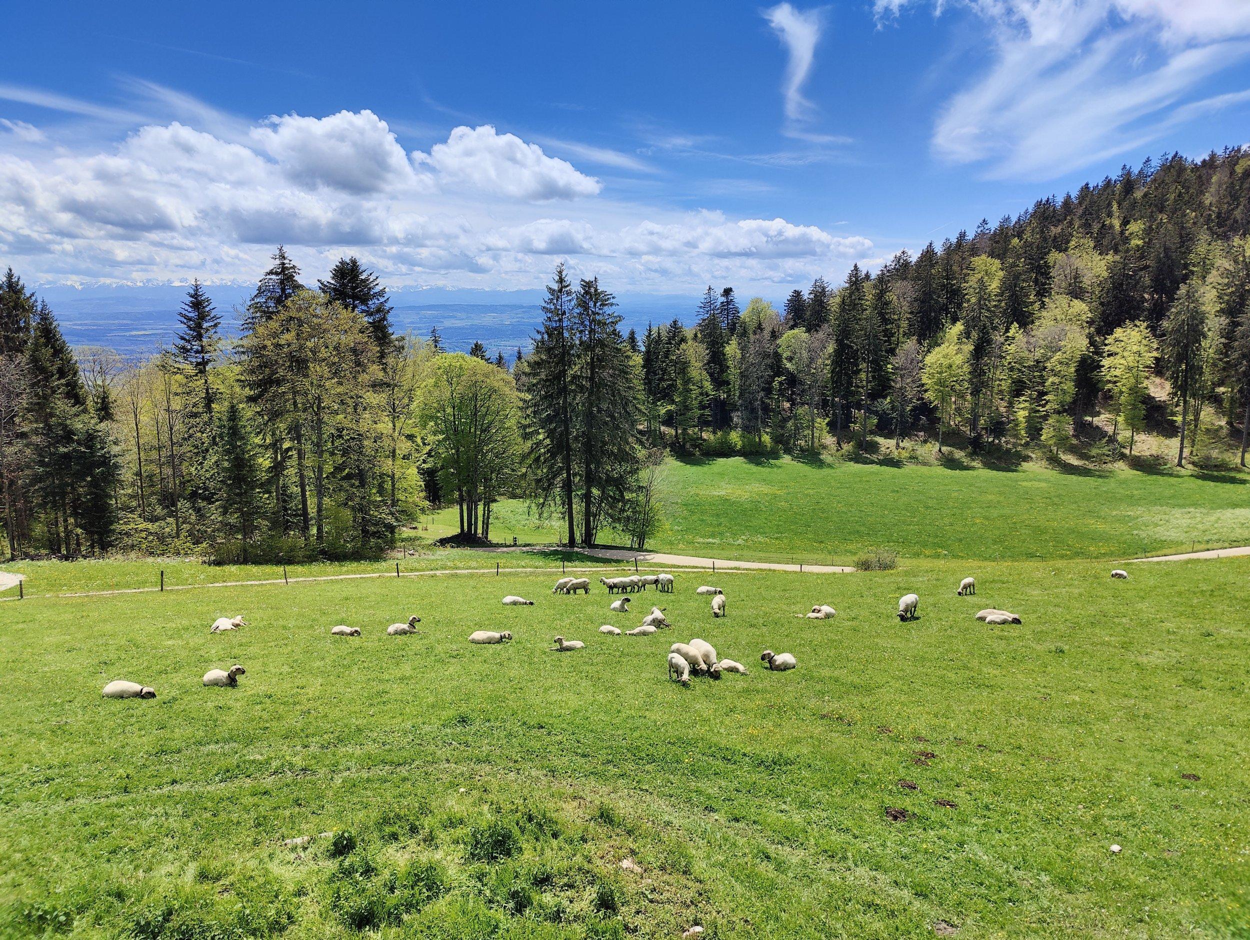 Jura Höhenweg Etappe 6 Weissenstein – Frinvillier