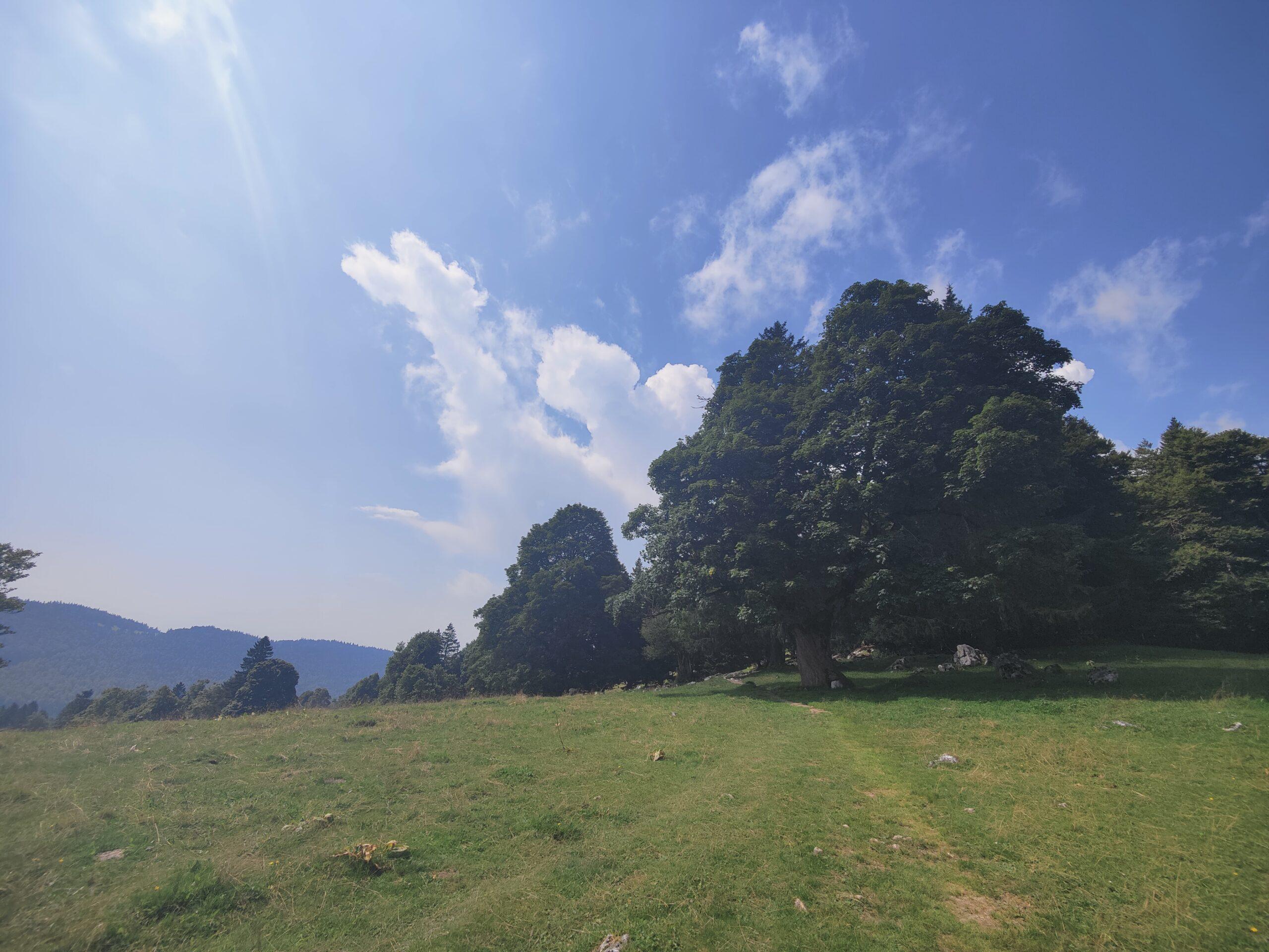 Jura Höhenweg Etappe 7: Frinviller – Chasseral